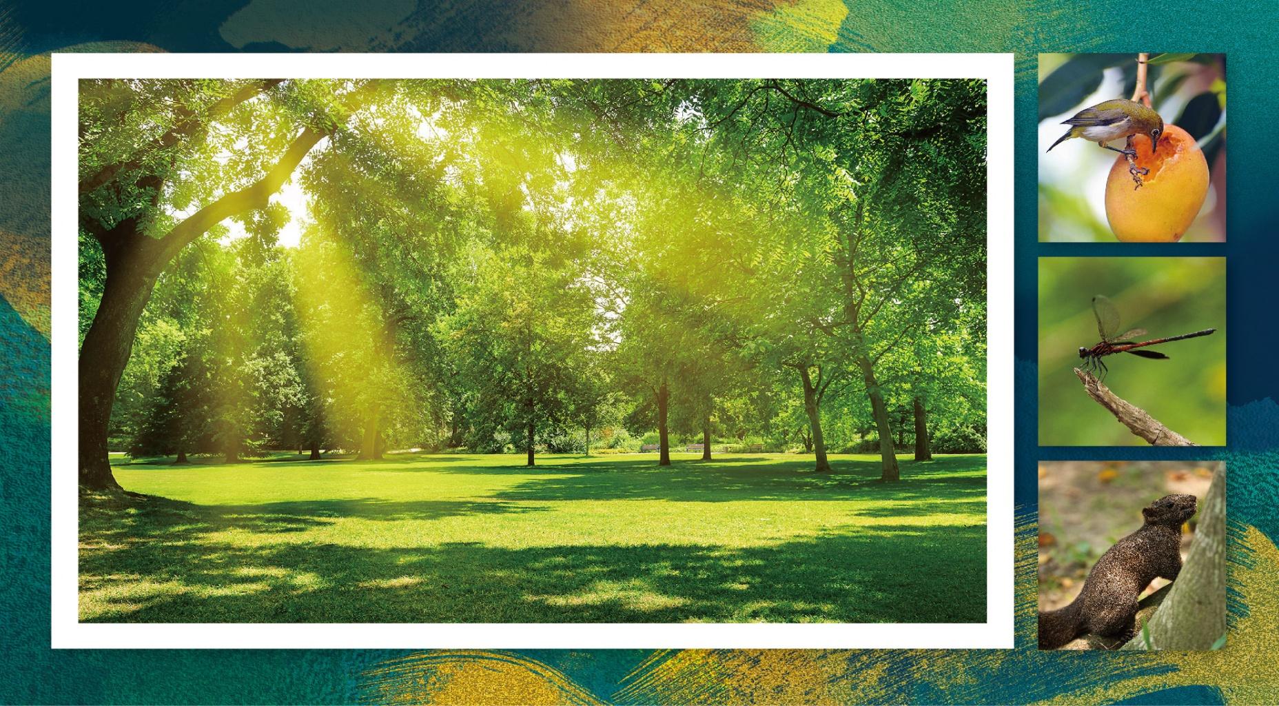 〈森情款款〉 樹比人多的家 滿滿幸福旋綠 和枝頭鳥兒哼一首晨光曲